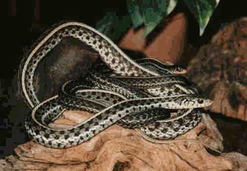 Zmije Schlangen