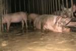 Schweine_dreck_bio