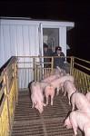 schweine_rampe_02