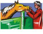Pferd_tierarzt_02