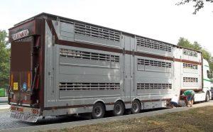 pol-ka-ka-bruchsal-bab-a5-tiertransporter-kontrolliert-erhebliche-verstoesse-festgestellt