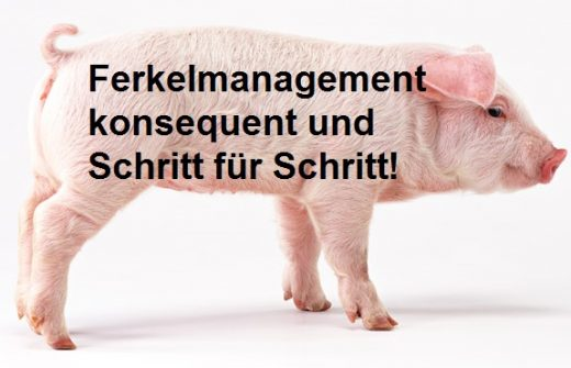 Ferkelmanagement