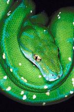 gruen_python_01.jpg