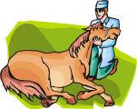 pferd_tierarzt_03