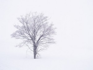 baum_winter_01
