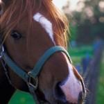 pferdekopf_01