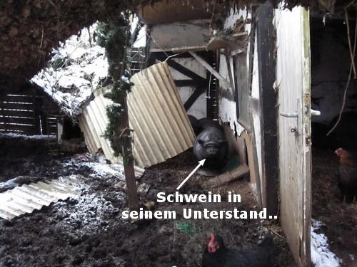 schwein_unterstand_arche