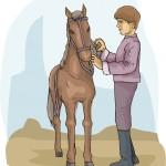 pferd_reiter