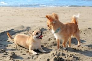 Hunde_am_Strand