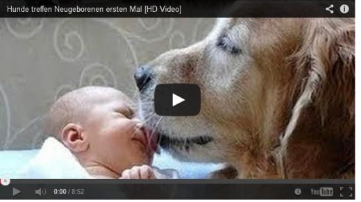 baby hunde