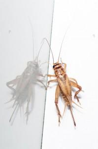Insekten-Wien
