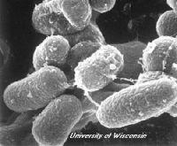 mycobakterien