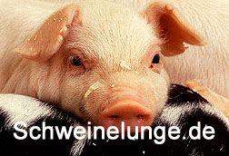 schweinelunge.de